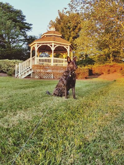 Dog walking in park during autumn
