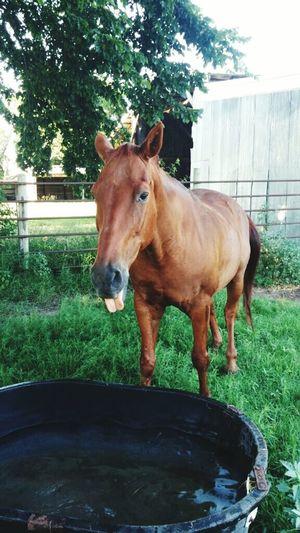 Enjoying Life Enjoying Nature Animal Love In The Field Horses Horselove