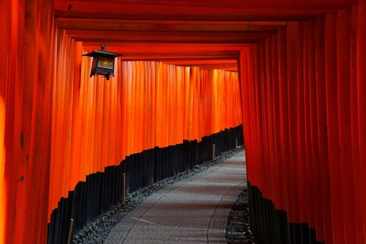 Torii Gates Torii Gate TORII Tori Orange Color Place Of Worship Religion Spirituality Architecture Red Built Structure The Way Forward Travel Destinations Outdoors No People