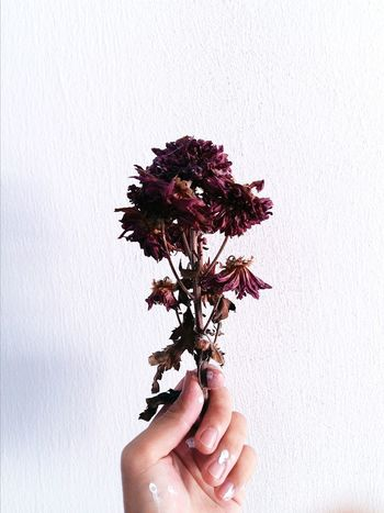 Long gone. Dead things can be beautiful, too. Flower Nature Red Jasmine Flowerporn Paint People Human Body Part Close-up Wall Torn Deadflowers Poem EyeEmNewHere Flying High
