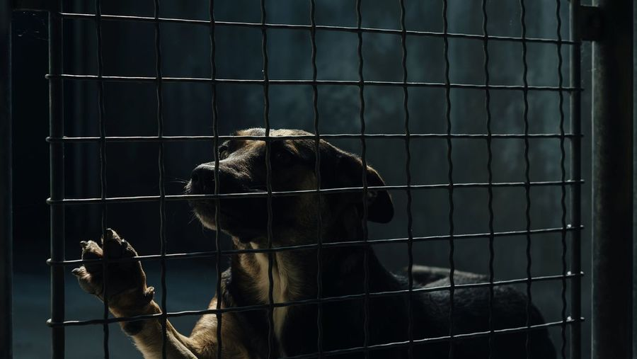 Cage Animals In Captivity Trapped Animal Themes One Animal Grid Birdcage No People Captivity Close-up Security Bar Prison Bars Indoors  Mammal Day Dog Shelter Canine Canine Friends Behind Bars Rescue Me!