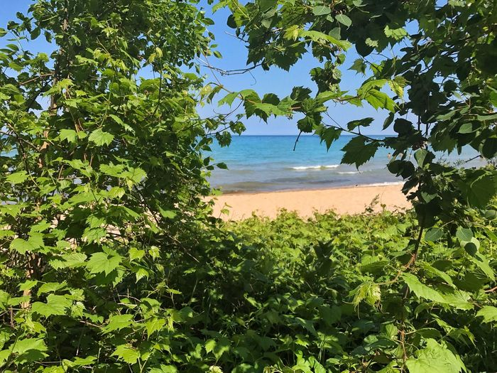 View of the lake through the trees Tree Nature Leaf Scenics Beauty In Nature Green Color Tranquil Scene Branch No People Landscape Beach Water Sky Lake Lake Michigan Framed By Trees Blue Color Tranquility Outdoors Day Waves Shore
