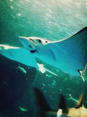 顔が笑 Cute Aquarium