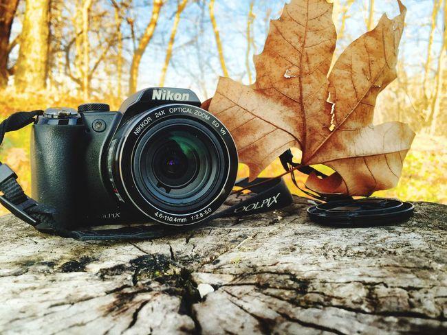 Mate Nikon Autumn Leaves