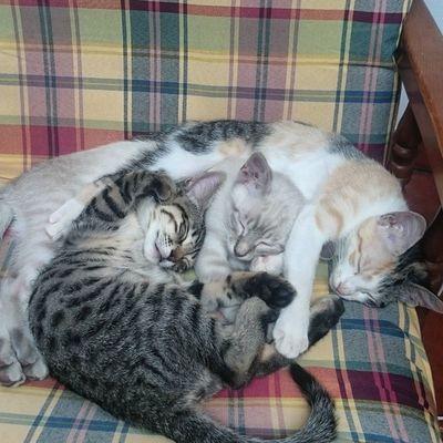 Kuschelklumpen zu dritt. Blanco_the_cat Rayado_the_cat Felicidad_the_cat Schlafendetiere_tsez
