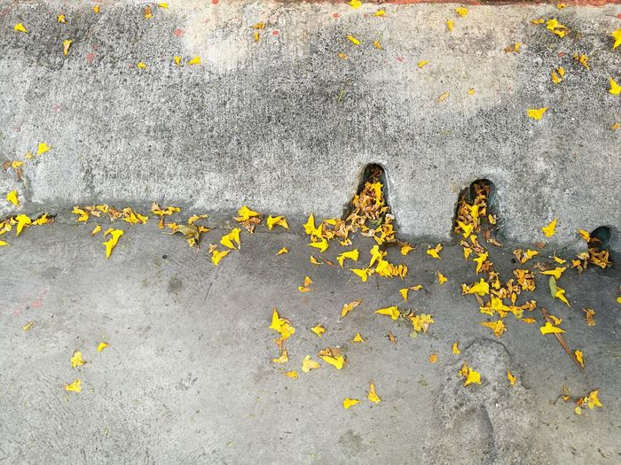 High Angle View Of Yellow Flowering Plant On Road