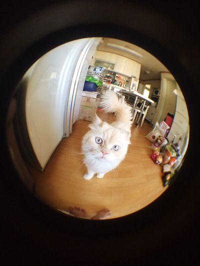 Call Me? Heema Fisheyelens Cat