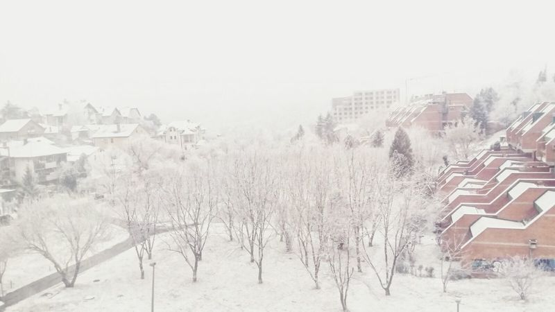 Winter Tree Snow Outdoors Snowing Nature Serbia,Belgrade Serbia Beograd Belgrade Beograd Firs Day Of Winter Cold Morning Fogscape View From My Window Belgradephoto No People Foggyday View Misty Morning Misty Landscape Amazing View