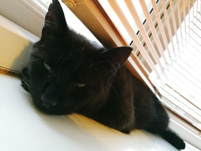 Cat Cat Napping Sleepy Relaxing HuaweiP9
