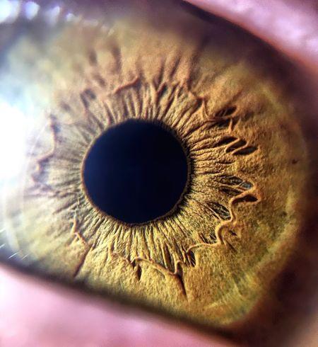 Macro Humaneye Eye Iris