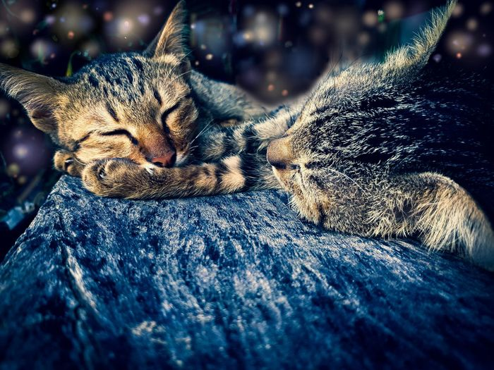 Sleeping In Love Love EyeEm Selects Reptile Leopard Close-up Cat Animal Scale Animal Markings Domestic Cat Ginger Cat
