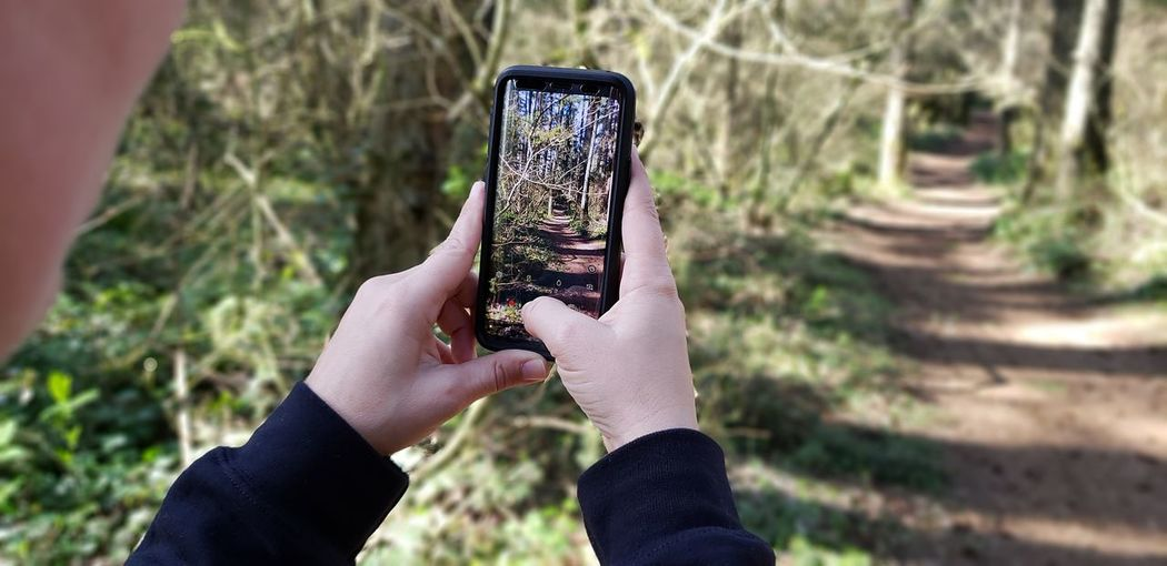 Cropped Image Of Person Photographing Trees In Forest