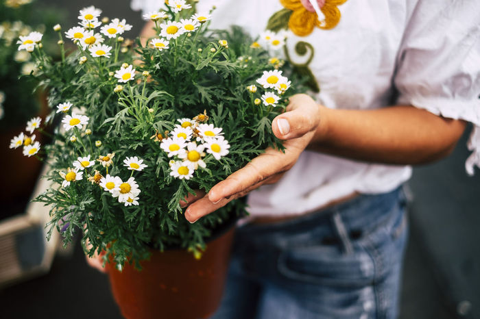 Midsection of woman holding flower pot