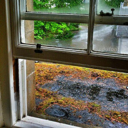Un altre meravellós dia de Pluja Rain a Escocia Scotland ... El darrer! Arts, cap a casa, cap a la canícula... Què voleu que us digui? S'està millor aquí! Aviemore viatgers2013