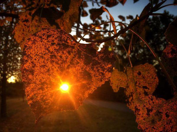 The Sunshine burns through the Autumn Leaves