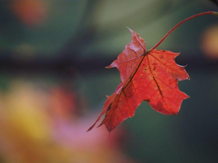 https://www.facebook.com/niklasstormfoto/ Leaf Autumn Season  Swedish Nature Beauty In Nature Focus On Foreground Close-up Growth Solna 2016 Oktober Niklas Autumn Mood My Best Photo