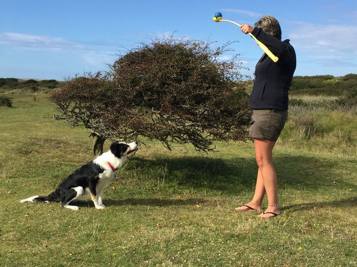 Focused Border Collie Woman Holding A Ball Up In The Air In A Thrower With A Collie Focused On The Ball Dog Training Pets Dog Domestic Animals One Animal Leisure Activity Animal Themes Standing One Person Motion Ball Playing Outdoors Lifestyles Grass Tree Nature Visual Creativity Human Connection