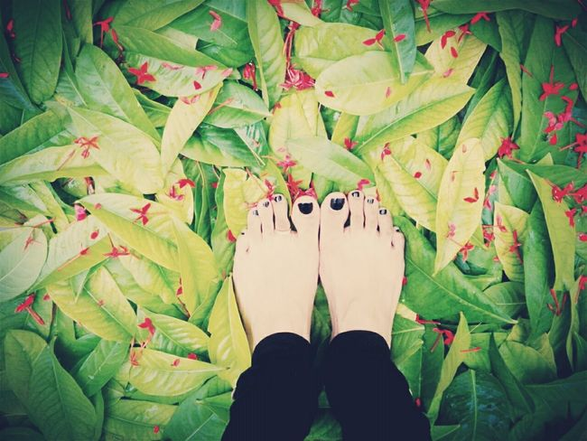 I dream of the winter in my heart turning to spring... Relaxing Taking Photos Beautiful EyeEm Nature Lover Naturelovers Shades Of Nature Leaves Flowers Feet Feetselfie Fashion&love&beauty Nature Blacknails  Eye4photography  Feetlove Feetsies Lookingdown Colorful Colorphotography Beautifulday
