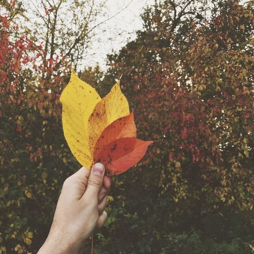 Autumn Autumn Leaves Leaves Hand Holding
