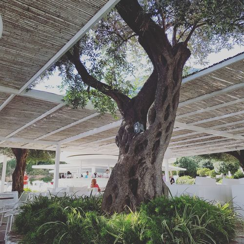 Corfu, Greece Preserve Nature The Week On EyeEm Trees Greece Photography Summer Sunshine