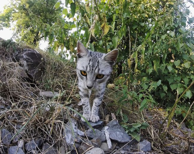 Domestic Animals Animal Themes Pets Domestic Cat One Animal Cat Mammal Whisker Alertness Feline Plant Messy Looking At Camera Outdoors Growth Day Nature Zoology Formal Garden No People