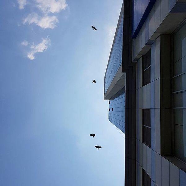 Igersmyanmar Myanmar Yangon Rangoon Sky Birds Skyscraper Burma AOV Artofvisuals Choose2create Yourworldgallery Travelgood Instagood Instagrammers Instagram Mobilephotography Mobilephoto Samsungs7edge Photo S7edgephoto Pigeons Instaclickoftheday Instaclickoftheweek Meistershots