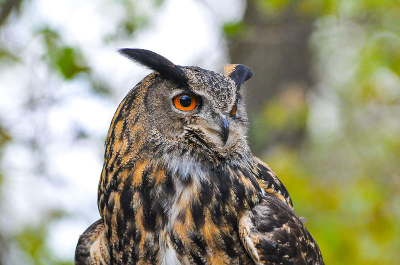 Close-up of a owl looking away