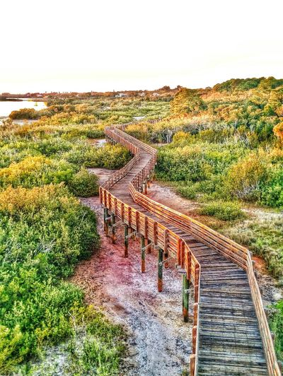 I love pathways, bridges and roads. You never know where they will lead you. This is one of the views from the Millenium Tower at Boca Ciega Millenium Park where i watched the sunset tonight. Bridges Pathways Find Me On Path Exploring Adventures Nature_collection Nature Tower Forest Getting In Touch