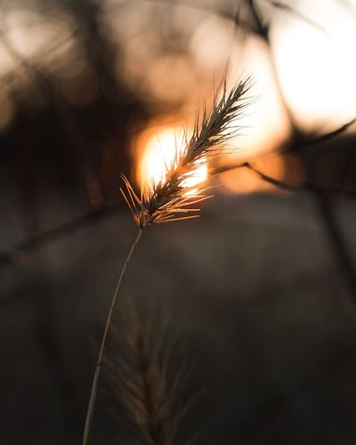 Close-up of plant against sunset sky