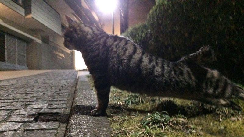 走り猫 野良猫 夜ねこ Stray Cat