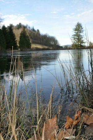 Depth Of Field Frozen Pond Winter Garden
