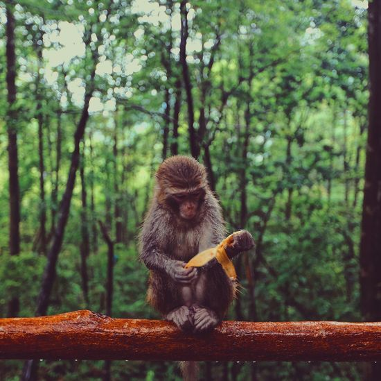 Monkey sitting on railing in forest