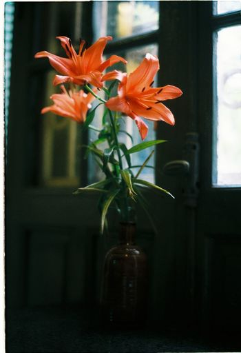 A lily vase in