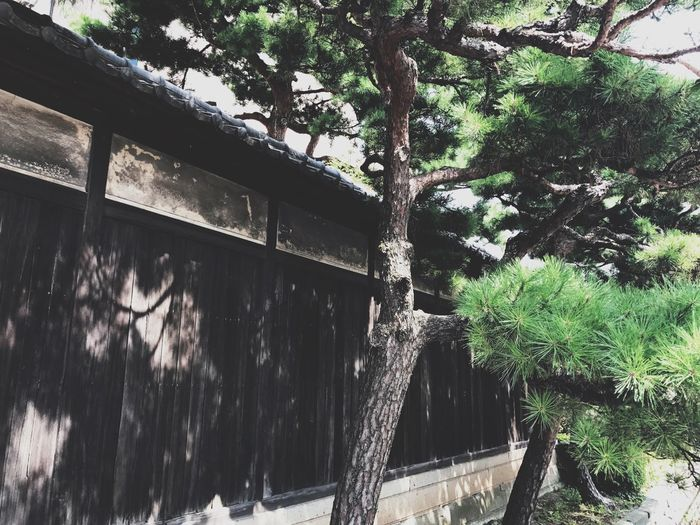 Tree Architecture Built Structure No People Low Angle View Building Exterior Nature Travel Photography Japan Photography Streetphotography Japanese Style House History Green Color Travel Tree Nature