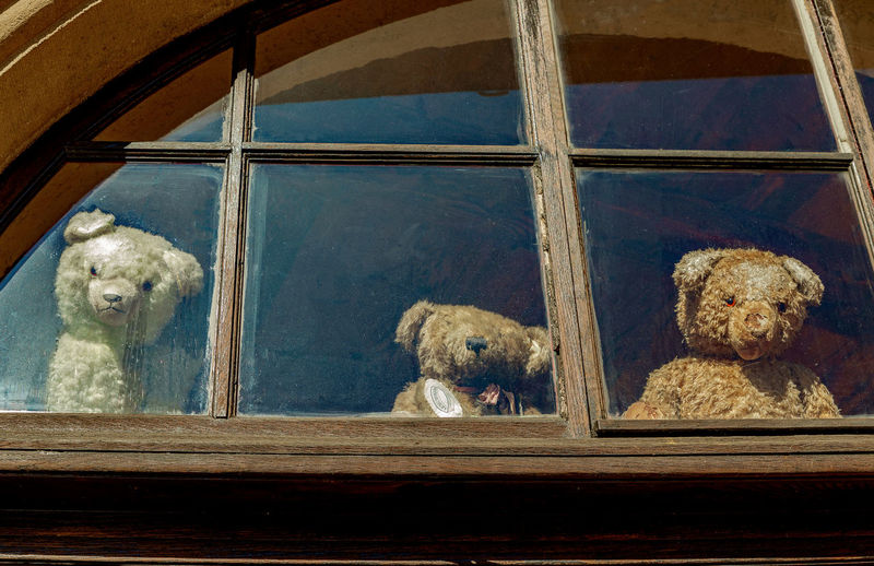 View of dog looking through glass window
