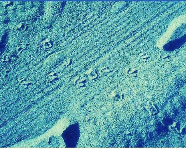 On The Beach Sand Footprints
