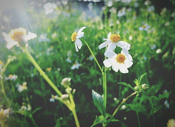 something on flower <3 First Eyeem Photo