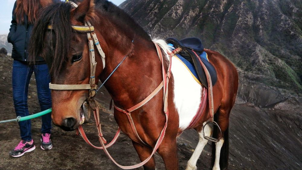 Horse Cart Brown Bridle Horse Working Animal Close-up