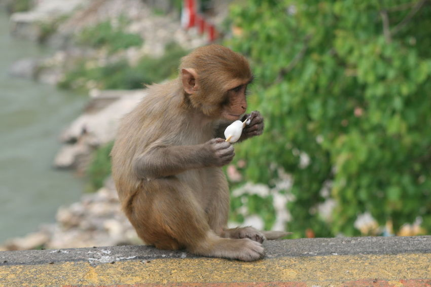 Summer is coming 🌞🌞🌞 Monkey Animal Love Sweet Moments Cool Dude Icecream🍦 Bestmoment Check This Out Enjoying Life Monkey Magic No Filter, No Edit, Just Photography Nature's Diversities