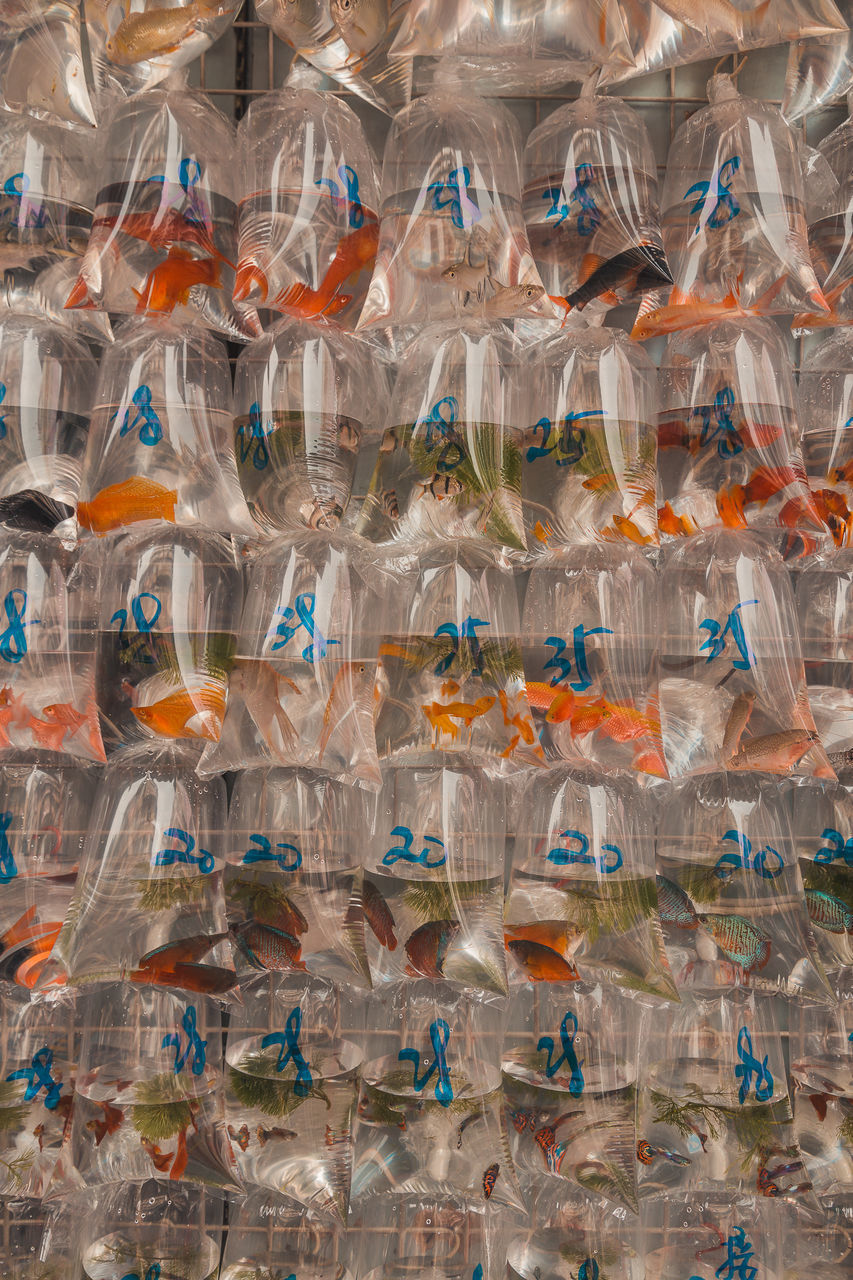 transparent, plastic, no people, full frame, abundance, indoors, large group of objects, plastic bag, day, bag, backgrounds, glass - material, retail, animal, group of animals, business, side by side, animal themes, large group of animals, vertebrate