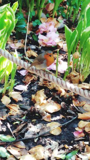 Bristol Zoo Robin