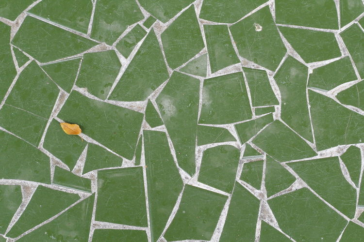 High angle view of green leaf on grass