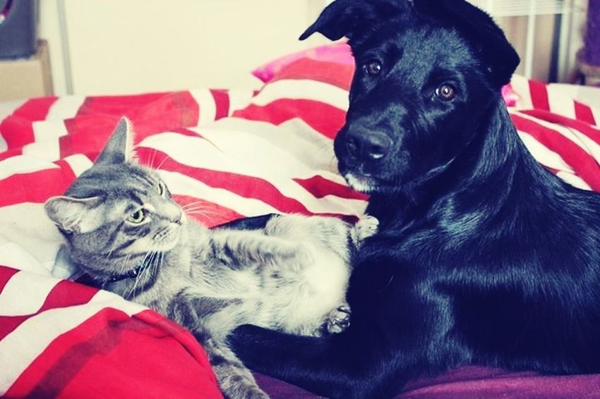 Mes Amours <3 Dog Cat Cute♡