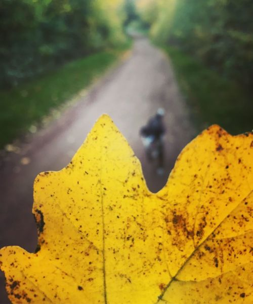 Autumn Pets Pet Dog Yellow Leaf Plant Part Autumn Close-up Plant Nature Beauty In Nature Green Color Tree
