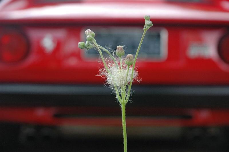 308gts Car Cars