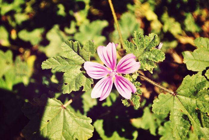 :) Flowers Beautiful ♥