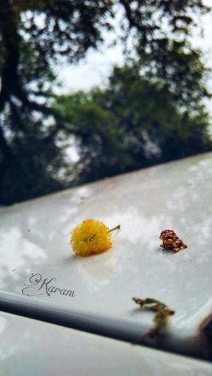 Randomclick Nature Focus Tiny Flower Yellow Flower Car Rooftop View  Phtotography Travel Light Shadow