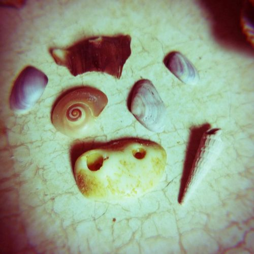 Shell seashells faces in places Things Cow Face artistic Perspectives On Nature Rethink Things Rethink Things