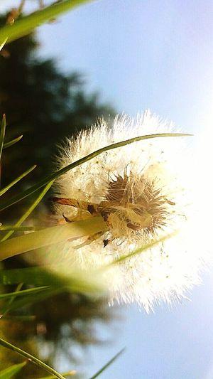 Day Sunlight Dandelion Grass Beautiful Nature Nice Day Today