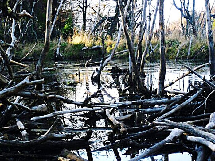 Tree Nature Forest Tranquility Water Tree Trunk No People Non-urban Scene Outdoors Scenics Beauty In Nature Fallen Tree Lake Bamboo Grove Routa Tres Panamericana Routa 3 Argentina Beauty In Nature Natural Disaster Tree Landscape Frozen Cold Temperature Travel Winter
